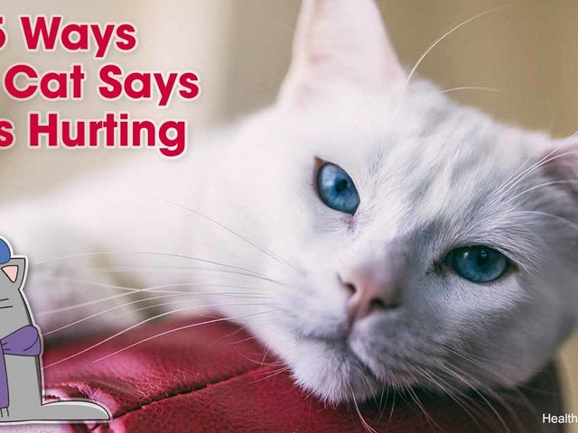 25 Signs Your Pet May Be in Pain