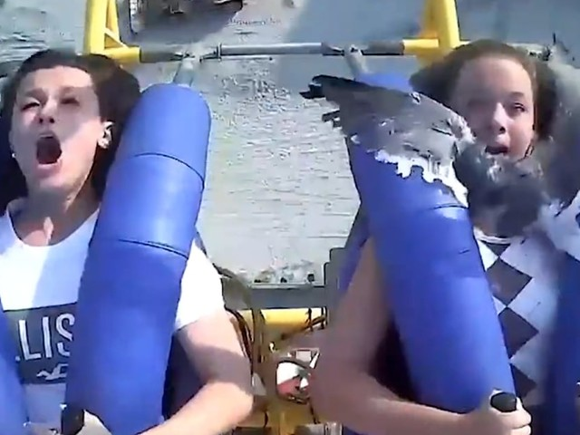 Video shows seagull flying into teen's face on Jersey Shore amusement park ride