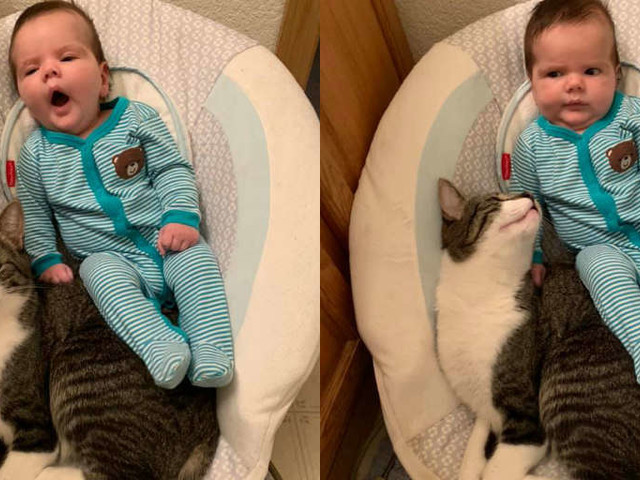 Cat Isn't Sure Why Baby Keeps Trying To Use HIS Chair