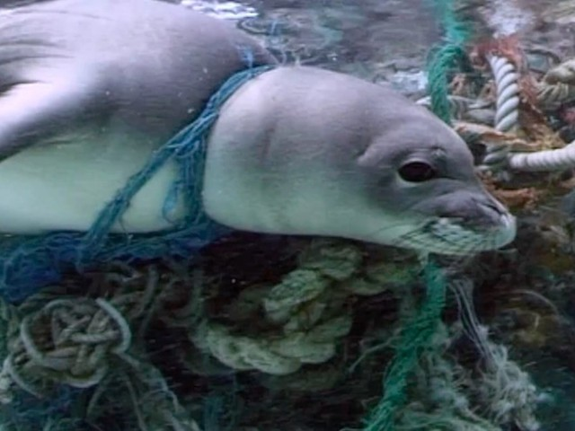These Creepy 'Ghost Nets' Are Killing Thousands Of Animals Every Year