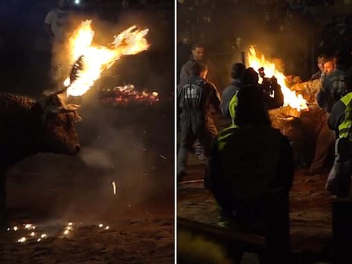 Terrified bull struggles to break free as it is tied up and set on fire during Spanish festival
