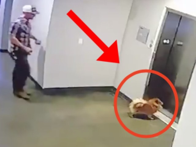 Heart-stopping video shows man save dog from moving elevator: 'I'm thankful I was there'