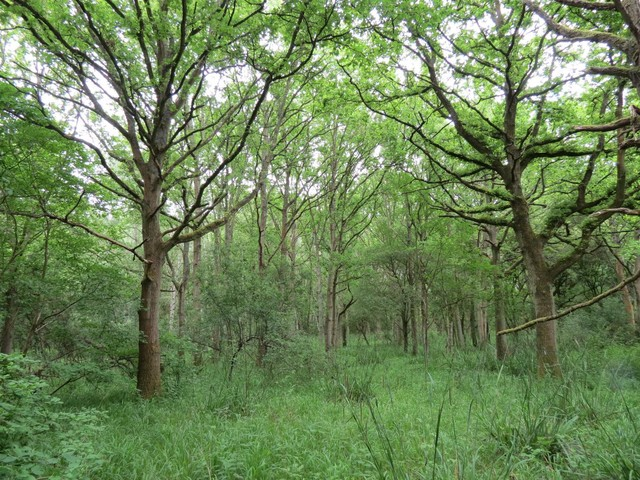 Passive rewilding can rapidly expand UK woodland at no cost
