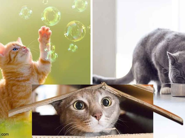 Why You Should Let Your Kitty Be the Control Freak She Wants To Be