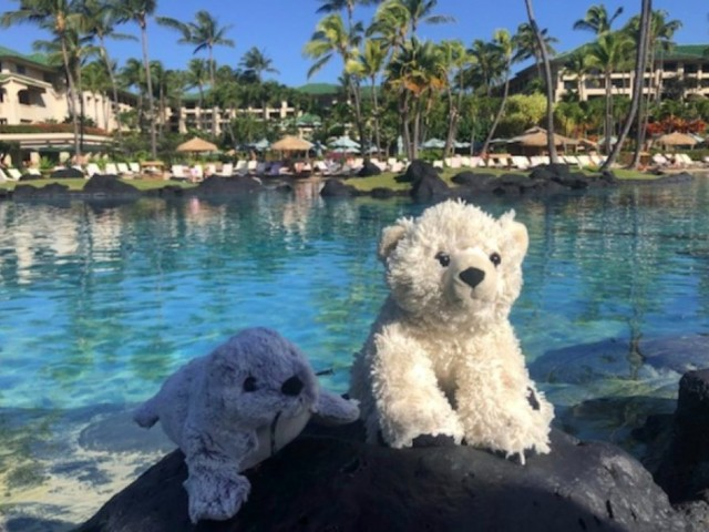 Hotel finds boy's missing stuffed animal and sends adorable pictures of the bear's new 'adventures'