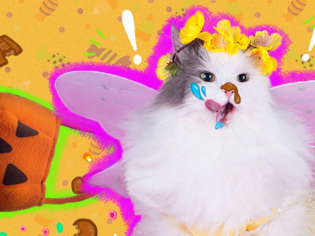 Help! My Cat Ate My Halloween Candy!