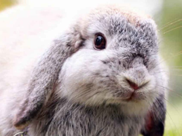 How to Care for Oral and Vision Health in Rabbits