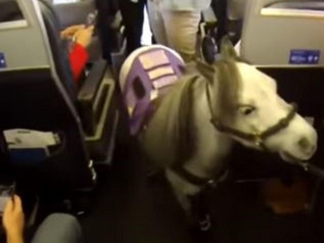 Emotional support animals may no longer fly in airplane cabins per new DOT rules