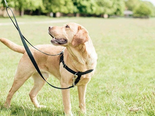 The 4 best no-pull harnesses recommended by dog trainers, walkers, and rescuers