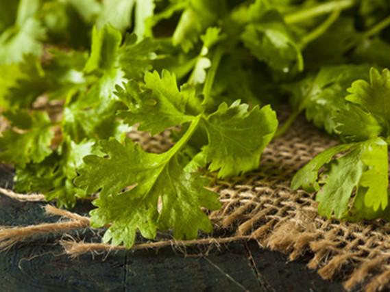 Top 10 reasons to eat cilantro