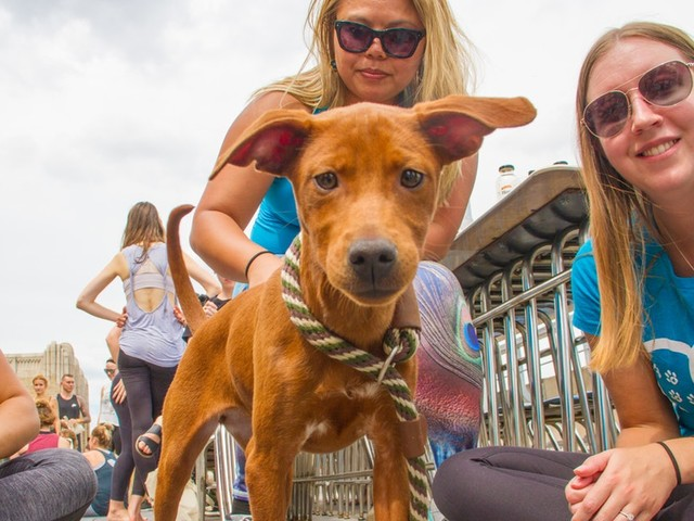 Franklin & Whitman's Yoga For The Pups Is The Best Way To Celebrate National Yoga Month
