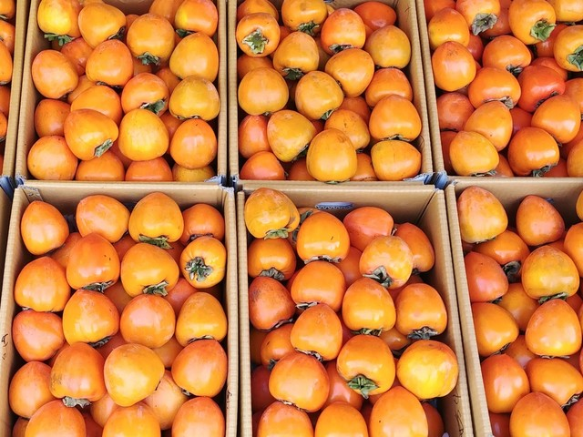 Persimmons fans: Your time has come