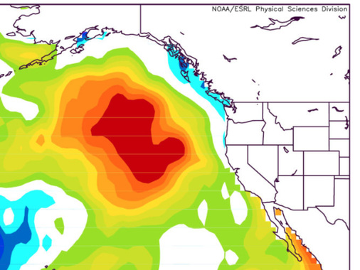 Strange Things Are Happening In The Waters Along The West Coast, And Fish Are Starting To Disappear