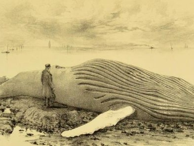 A Dead, Decomposing Whale Once Toured the United Kingdom