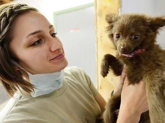How to Become a Veterinarian: Key Steps and Qualities