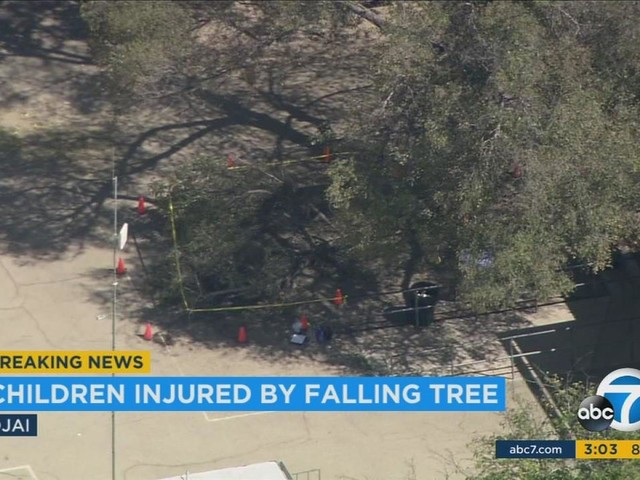 5 injured, 2 critically after tree falls at Ojai elementary school