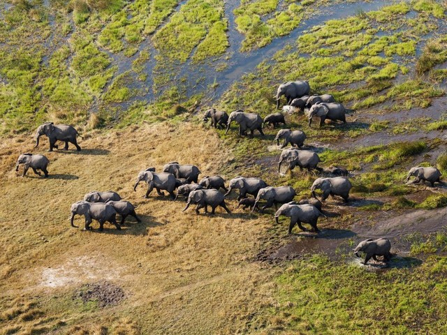 Elephants counted from space using satellites and AI