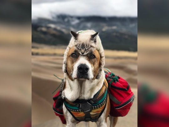 Dog Who Loves To Go On Adventures Now Has The Sweetest Traveling Companion