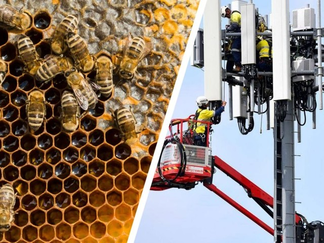 Multiple Studies Strongly Suggest Wireless Radiation Is Harming Our Bees