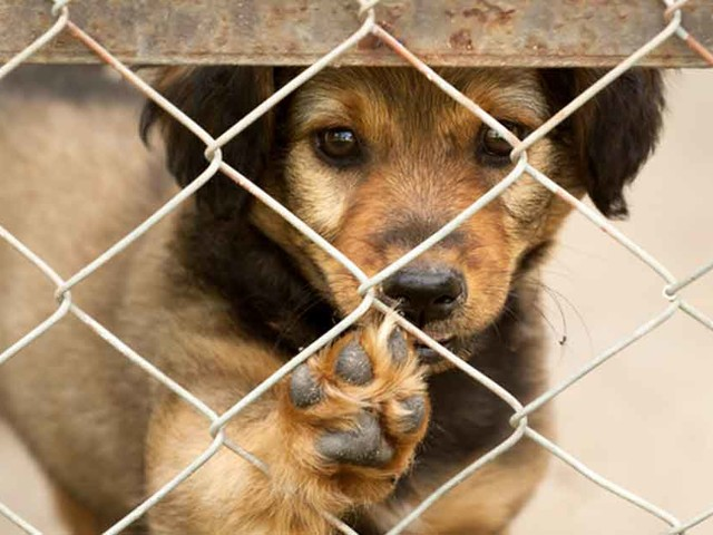 New Law Helps Abandoned Animals Find New Homes Faster