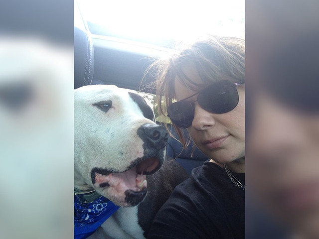 Pit Bull Found As Stray Is Changing Everyone's Mind About His Breed