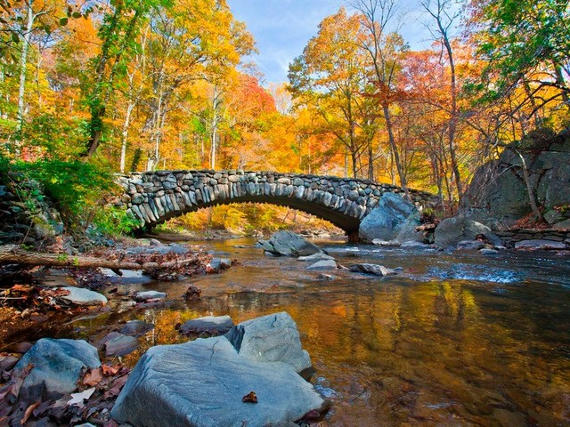 The 14 Best Places to See Fall Foliage (and Snap Some Pics) in DC Proper