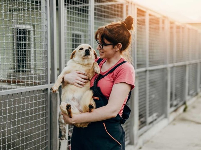 Millennials are 50% More Likely to Adopt a Pet Than to Have a Child in the Next 12 Months
