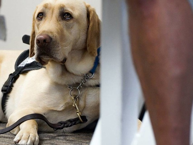 This airline has changed its rules for emotional support animals