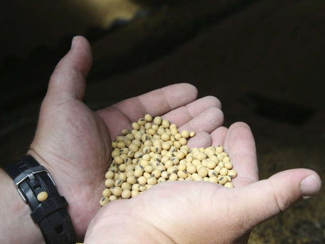 Chinese buyers asking about US soy, pork before trade talks