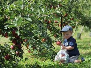 It's Apple Picking Season On Cape Cod!