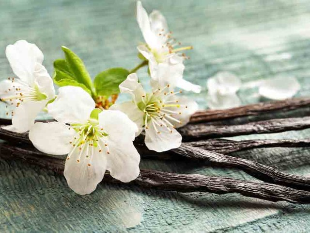 How to grow vanilla beans at home