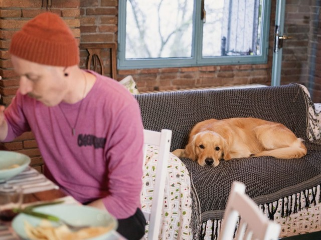 Pet-friendly stays: These Airbnbs were wishlisted the most for traveling with your pooch