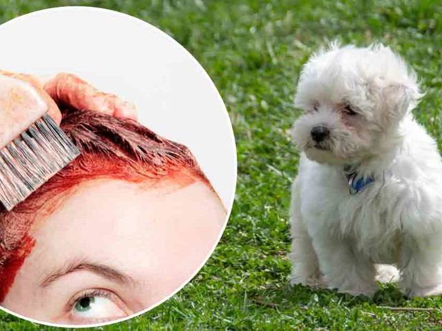Dog Almost Dies From Human Hair Dye — What Does That Tell You?
