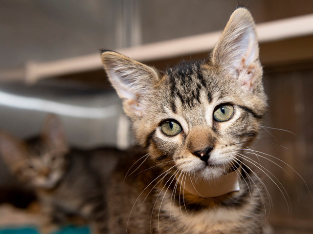 OC Animal Care shelter to receive $100K grant to help save neonatal kittens from euthanasia
