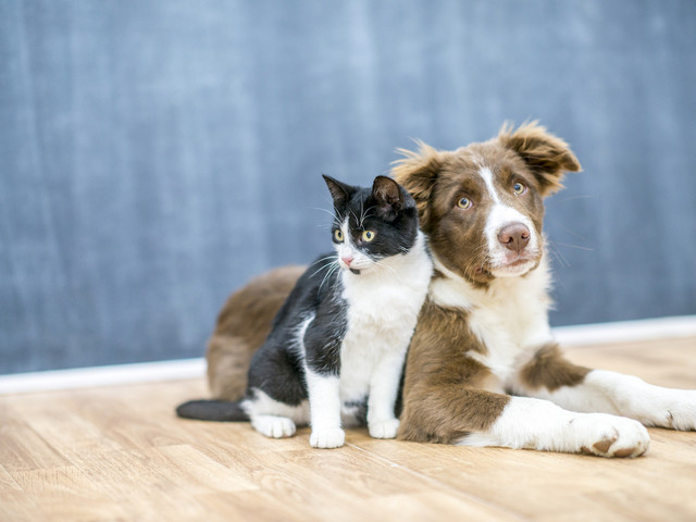 Guide to Pet Boarding Services