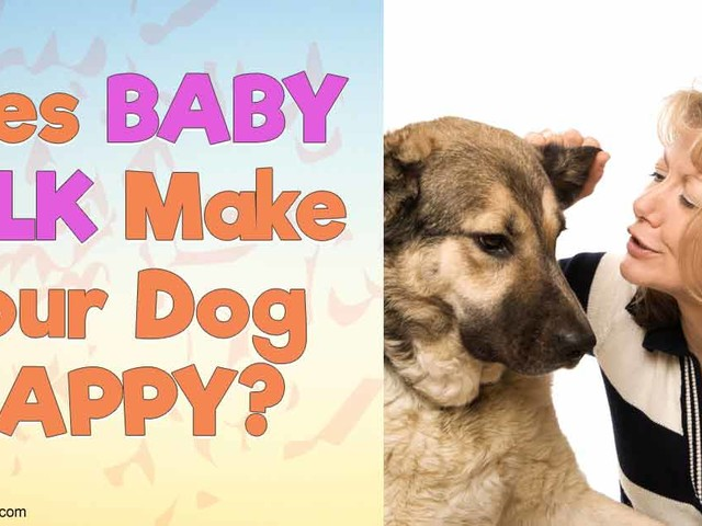 Why Your Adult Dog Doesn't Respond to Your Baby Talk