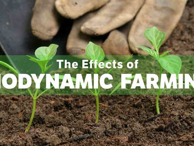 The Effects of Biodynamic Farming on the Environment and Food Quality