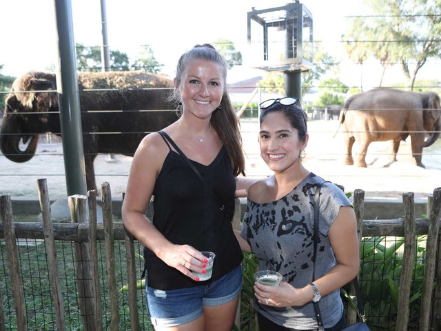 Call of the Wild: Party-goers get into vibe at Houston Zoo's Silent Disco