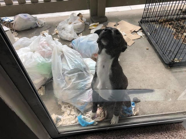 'They could feel their bones upon picking them up': 5 severely malnourished pups rescued in Houston
