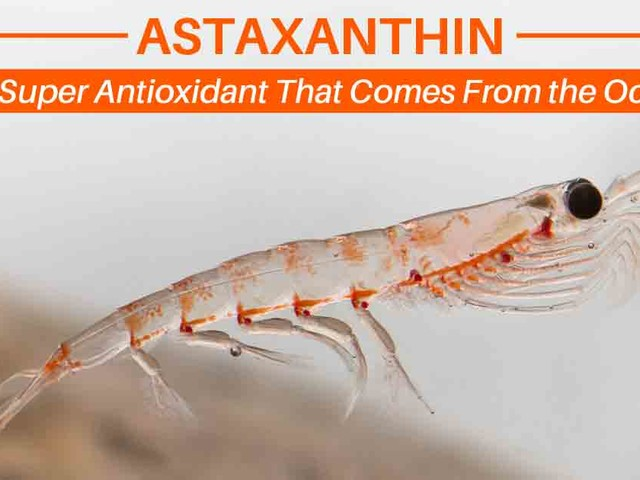 Astaxanthin: The Super Antioxidant That Comes From the Ocean