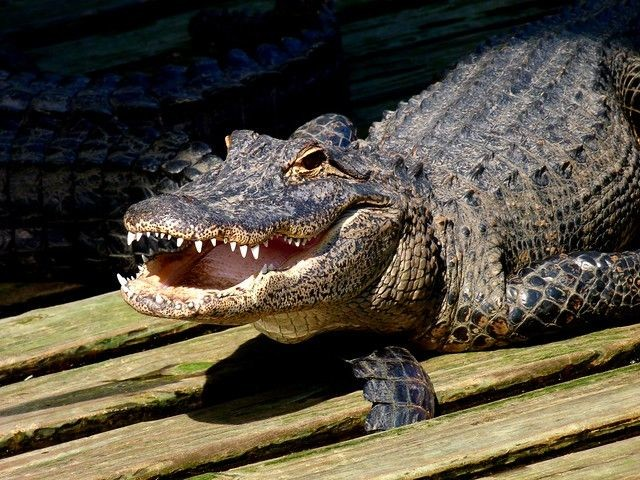 "Police Warn That Flushing Meth down the Toilet Could Lead to ""Meth-Gators"""