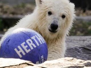 Berlin zoo unveils name of latest polar bear cub