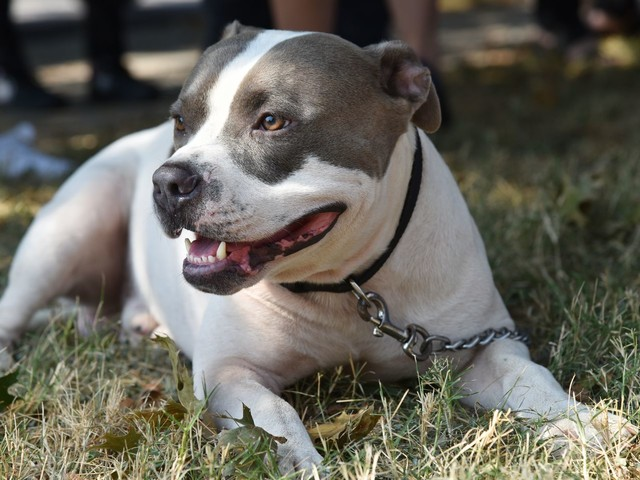 Amendment protecting Prince George's pit bull ban approved by council