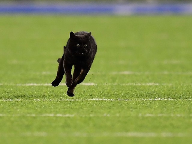 The 'Monday Night' Football cat cursed the NFL's feline teams