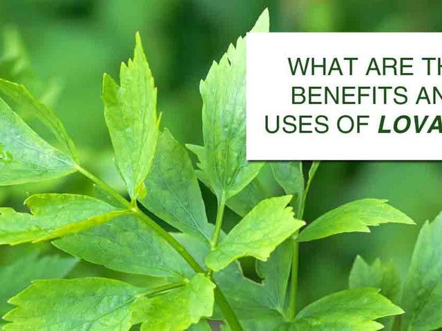 Lovage: How does this herb lift up your health?