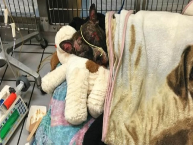 Dog set on fire at park in Richmond, Virginia, has died, shelter says
