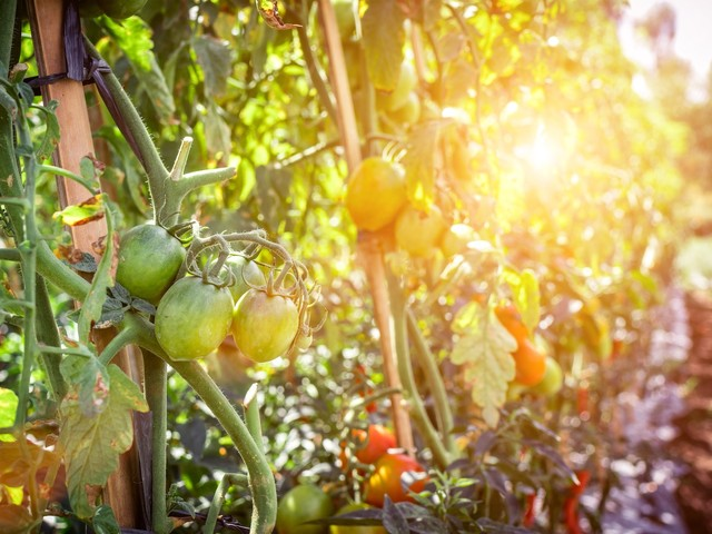 How to Use Design Thinking to Improve Our Food Systems