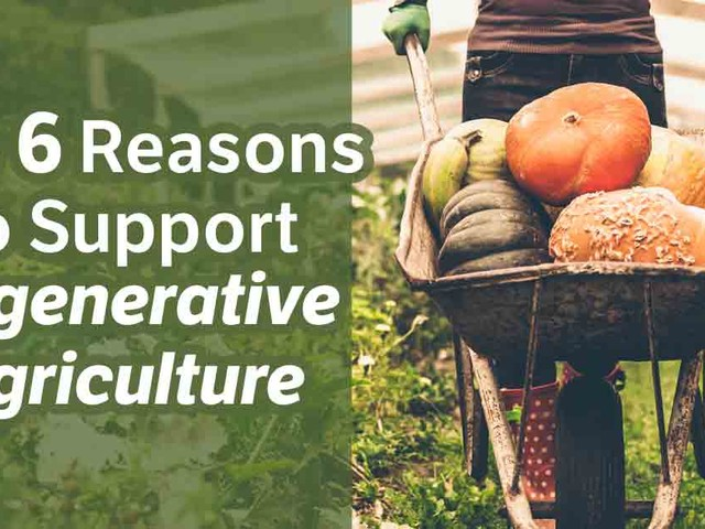 Top 6 Reasons to Support Regenerative Agriculture