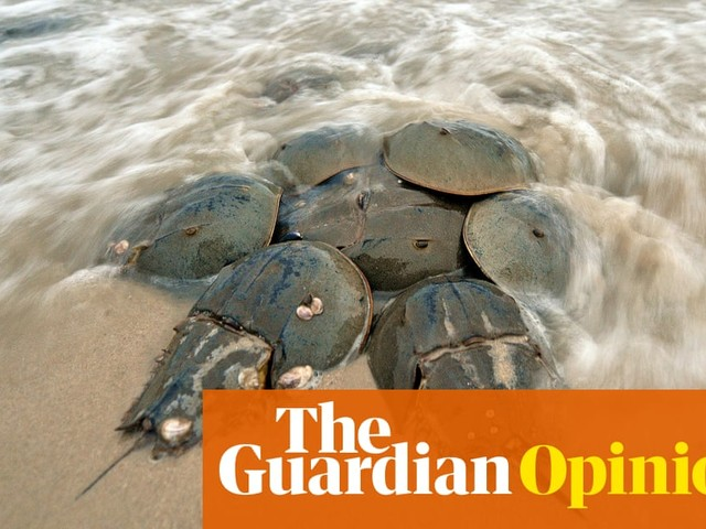 Animals are our overlooked allies in the fight against Covid | Melanie Challenger