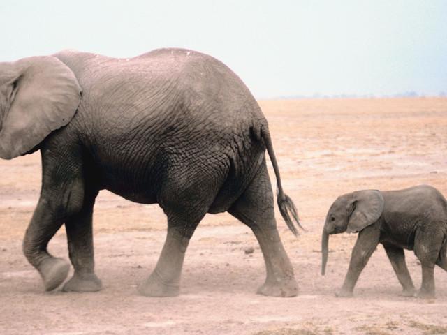 Celebrating Elephants On World Elephant Day
